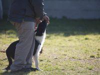 emporio-pet-addestramento-23